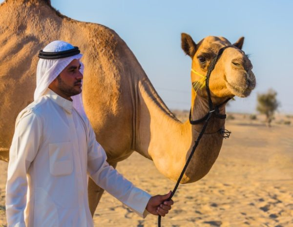 Camel MERS