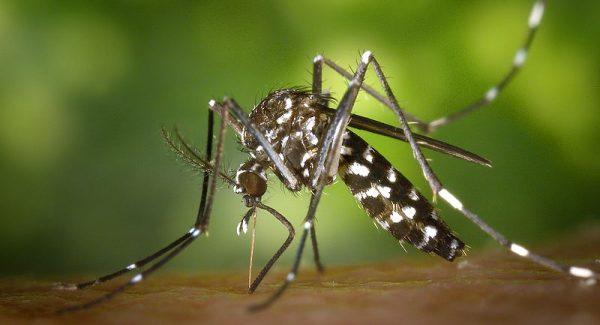 Mosquito-borne-illness